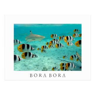 Requin en carte postale blanche des textes de Bora