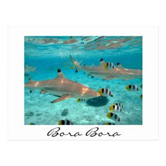 Requins dans la carte postale blanche des textes
