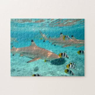 Requins dans le puzzle denteux de lagune de Bora