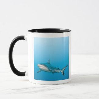Requins gris de récif (amblyrhnchos de mug