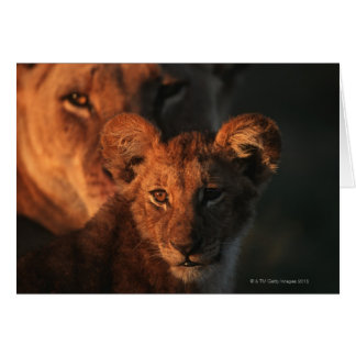 Réservation de faune de Moremi, Botswana 2 Carte De Vœux