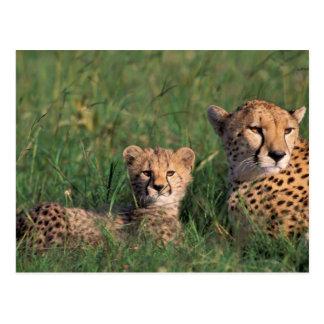 Réservation de jeu de l'Afrique, Kenya, Mara de Carte Postale