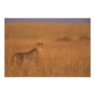 Réservation de jeu de l'Afrique, Kenya, Mara de ma Photographies