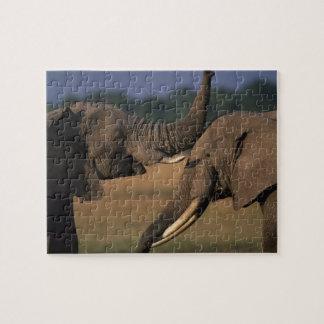 Réservation de jeu de l'Afrique, Kenya, Mara de ma Puzzle