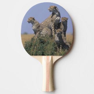 Réservation de jeu de l'Afrique, Kenya, Mara de Raquette De Ping Pong