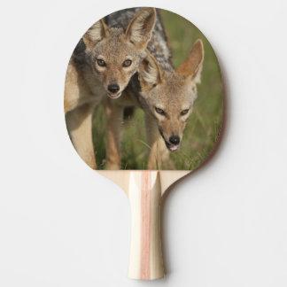 Réservation de jeu du Kenya, Mara de masai. À dos Raquette De Ping Pong