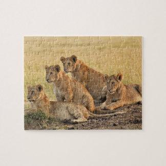 Réservation nationale de Mara de masai, Kenya, Puzzle