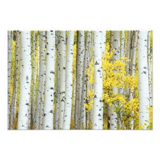 Réserve forestière des Etats-Unis, le Colorado, Wh Tirage Photo