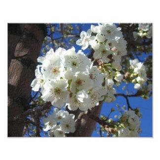Ressort blanc des fleurs I floral Photos D'art