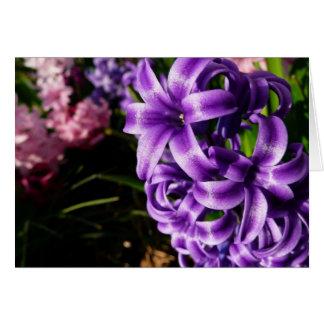 Ressort bleu de la jacinthe II floral Cartes