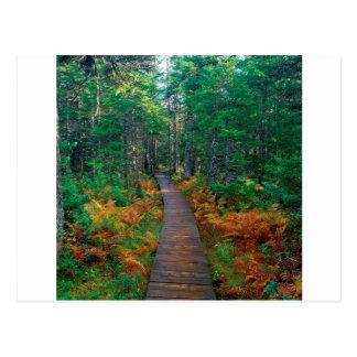 Ressortissant Nouveau Brunswick de Fundy d'arbre Cartes Postales