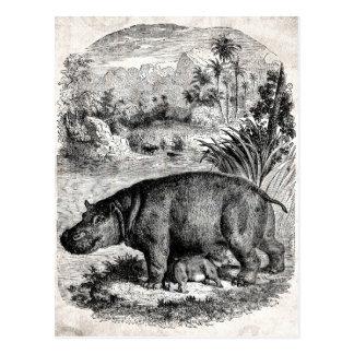Rétro modèle d'hippopotames de 1800s de bébé vinta cartes postales