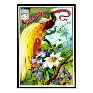 Rétro oiseau Postacard de paradis Cartes Postales