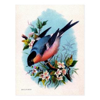 Rétro oiseau vintage sur la carte postale de