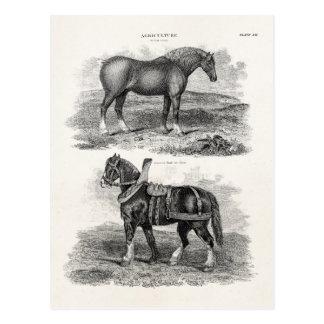 Rétros chevaux agricoles de cheval vintage de cartes postales