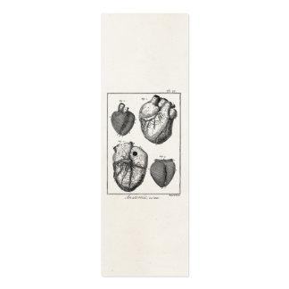 Rétros coeurs cardiaques d anatomie de coeur vinta modèles de cartes de visite