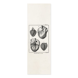 Rétros coeurs cardiaques d'anatomie de coeur vinta modèles de cartes de visite