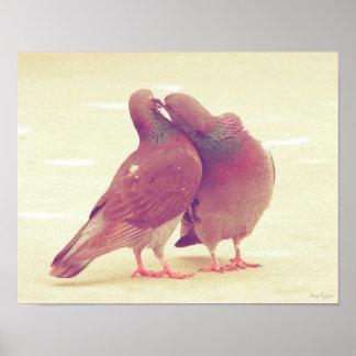 Rétros inséparables de pigeon embrassant la photo posters
