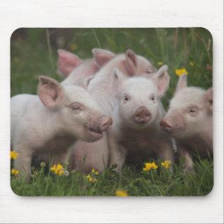 Réunion des trois petits porcs tapis de souris