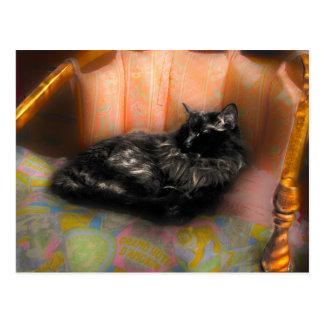 Rêver de chat noir carte postale