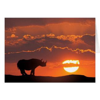 Rhinocéros au coucher du soleil, masai Mara, Kenya Carte De Vœux