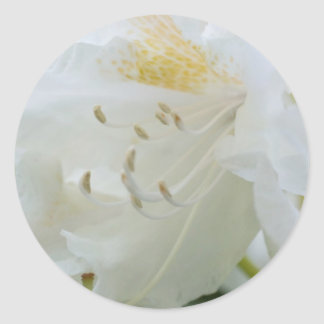 Rhododendron blanc du rhododendron | Weisse Autocollant Rond