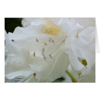 Rhododendron blanc du rhododendron   Weisse Carte De Vœux