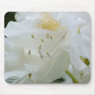 Rhododendron blanc du rhododendron Weisse Tapis De Souris