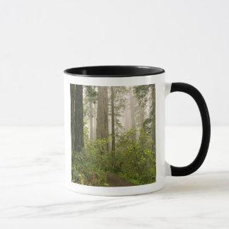 Rhododendron fleurissant parmi les séquoias de mugs
