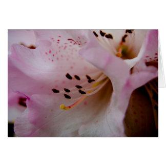 Rhododendron rose du rhododendron   Rosa Carte De Vœux