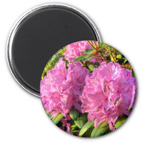 Rhododendron rose II Magnet Rond 8 Cm