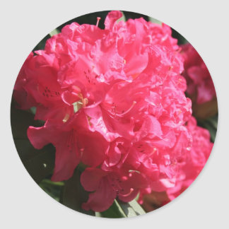 Rhododendron rose sticker rond