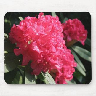Rhododendron rose tapis de souris