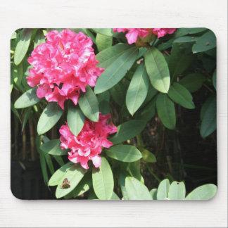 Rhododendron Tapis De Souris