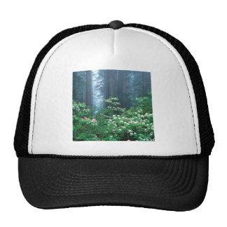 Rhododendrons de floraison de séquoias de forêt casquettes