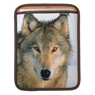 Rickshaw iPod de nature de loup/caisse d'ordinateu