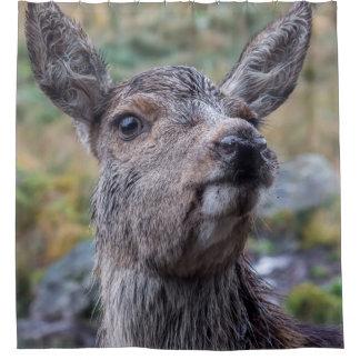 rideau en douche de photographie de cerfs communs