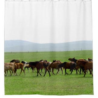 Rideaux De Douche Chevaux sur la prairie - photographie de paysage
