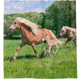 Rideaux De Douche Les chevaux de Haflinger avec les poulains mignons
