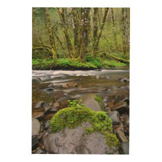 Rivière dans la forêt verte, Orégon Impression Sur Bois
