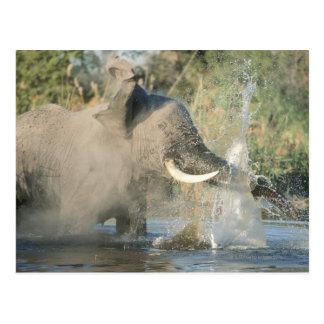 Rivière de Chobe, Botswana, Afrique Carte Postale