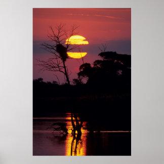 Rivière de Sabi au coucher du soleil, parc Affiche