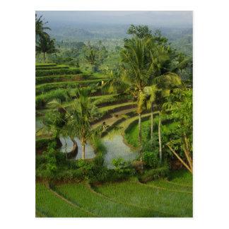 Rizière de terrasse dans Bali Carte Postale