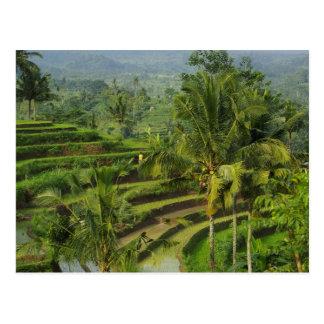 Rizière de terrasse dans Bali Cartes Postales