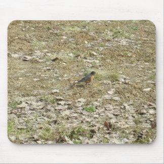 Robin dans le feuille sec tapis de souris