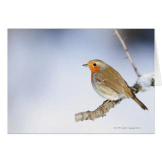 Robin était perché sur une branche en hiver cartes