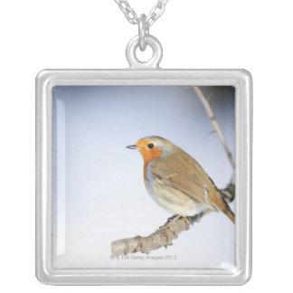 Robin était perché sur une branche en hiver collier