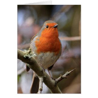Robin gai cartes