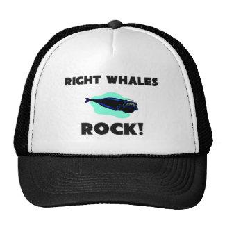 Roche de baleines droites casquettes de camionneur
