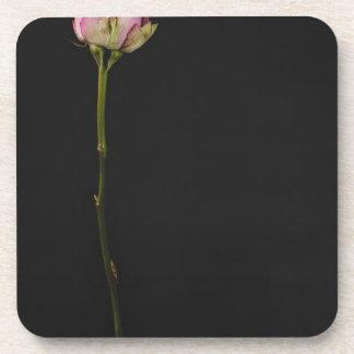 Rose 3 de rose sous-bock
